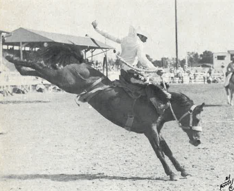 Larry Mahan riding a saddle bronc horse at Frontier Days