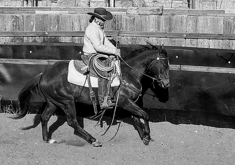loping horse in roundpen
