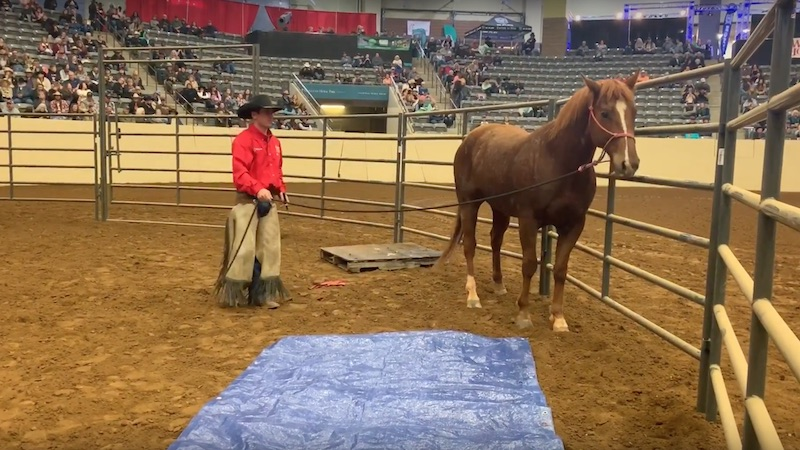 Wade Black getting a horse to cross a tarp