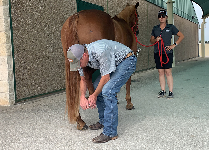 veterinarian doing a flexion test for arthritis a top choice on our list of horse health concerns