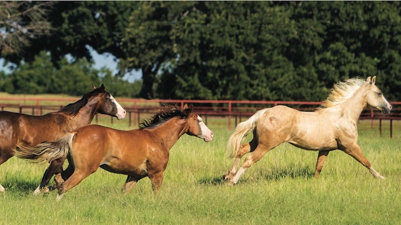 horses running through a pasture representing horse health