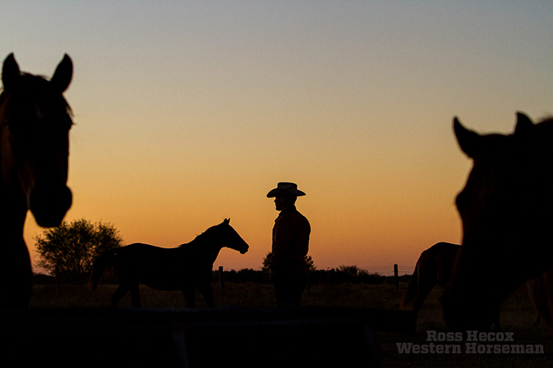 Horse Division Manager James Clement III feeds horses at sunrise on the King Ranch.