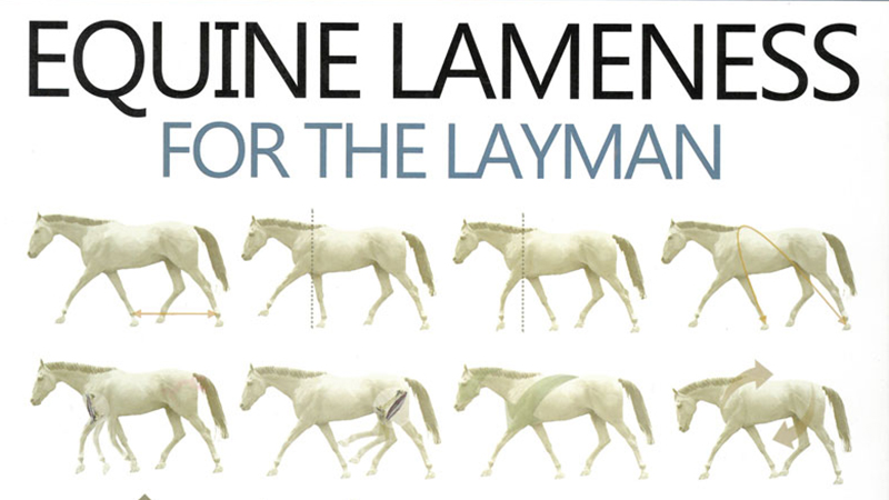 The cover of the book Equine Lameness for the Layman