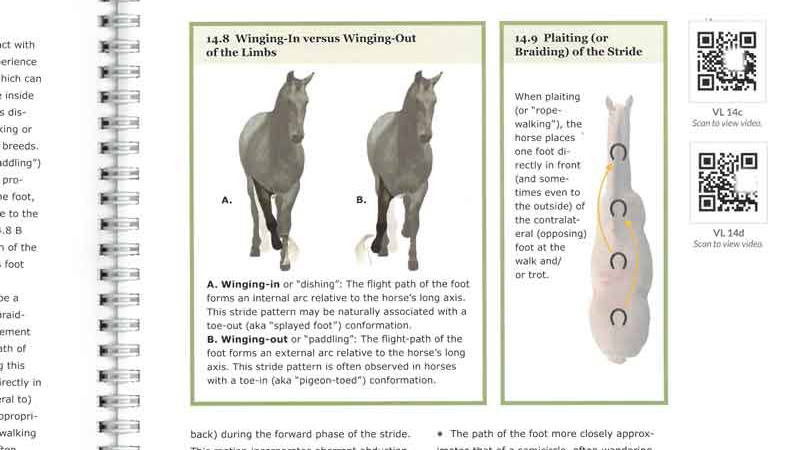 A page from the book Equine Lameness shows diagrams and QR codes readers can scan for more information.