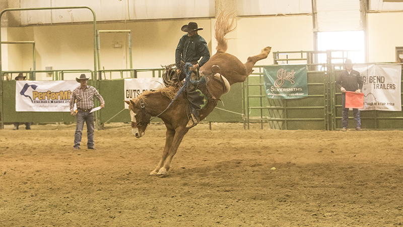 Canadian Aaron Mercer rides a ranch bronc at the WSRRA National Finals in 2016.