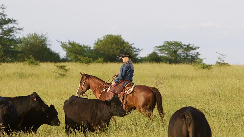 Brandi Shannon rides a horse through cattle herd.