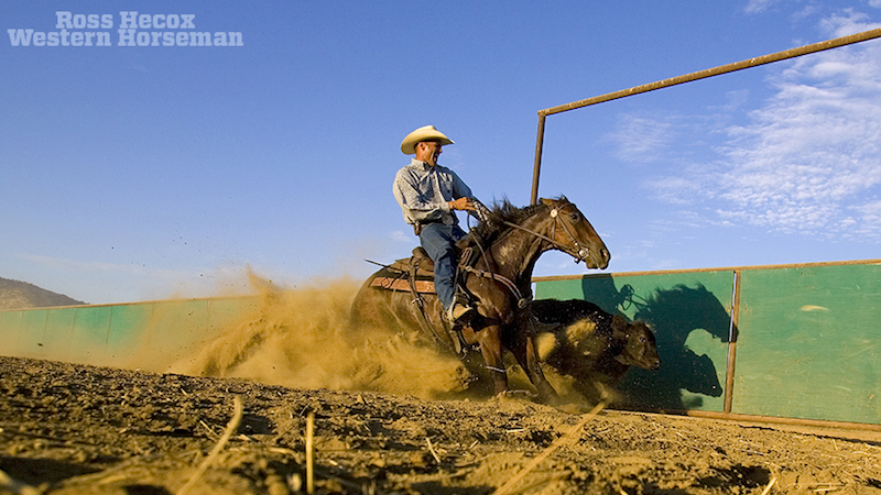 Reined cow horse trainer Lance Johnston turns a cow on the fence.