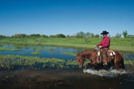 horse crossing flood plain which can be hard on horses hooves
