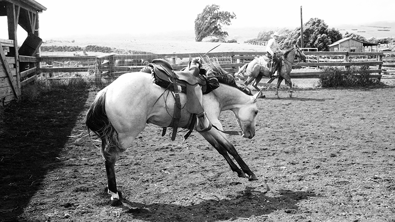 A horse that in your opinion was going to be a quick learner may turn out to be a rank one.