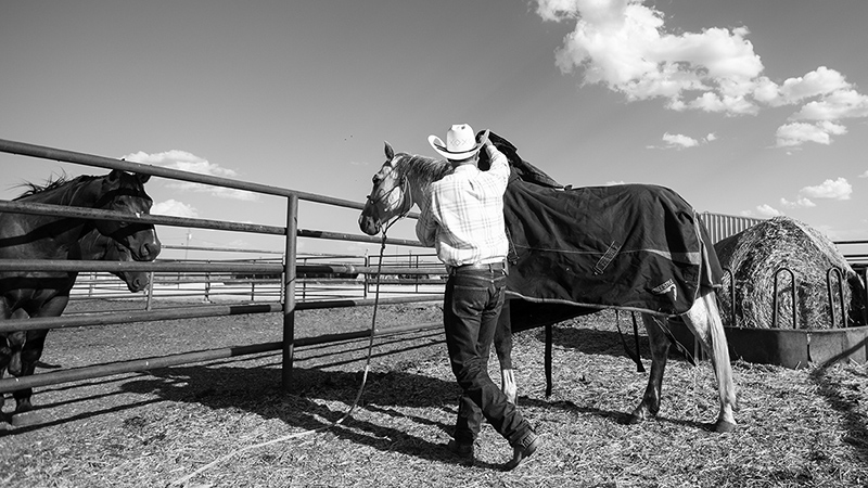 Some horse owners decide to blanket their horses in the winter.