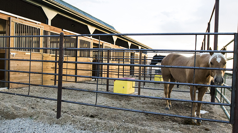 A stall with a run attached keeps horses happy and active.