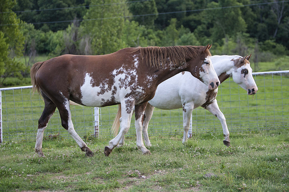 two horses in a pasture