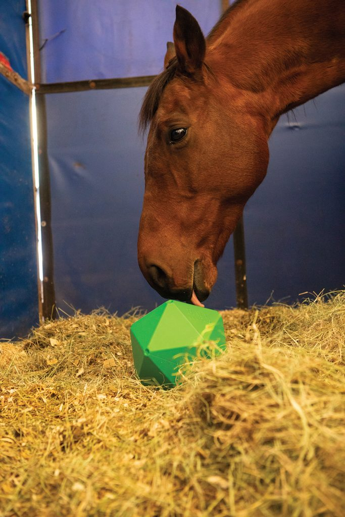 Using toys designed for horses can keep horses mentally active.