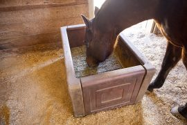 Putting hay in a slow feeder keeps horses occupied and has health benefits.