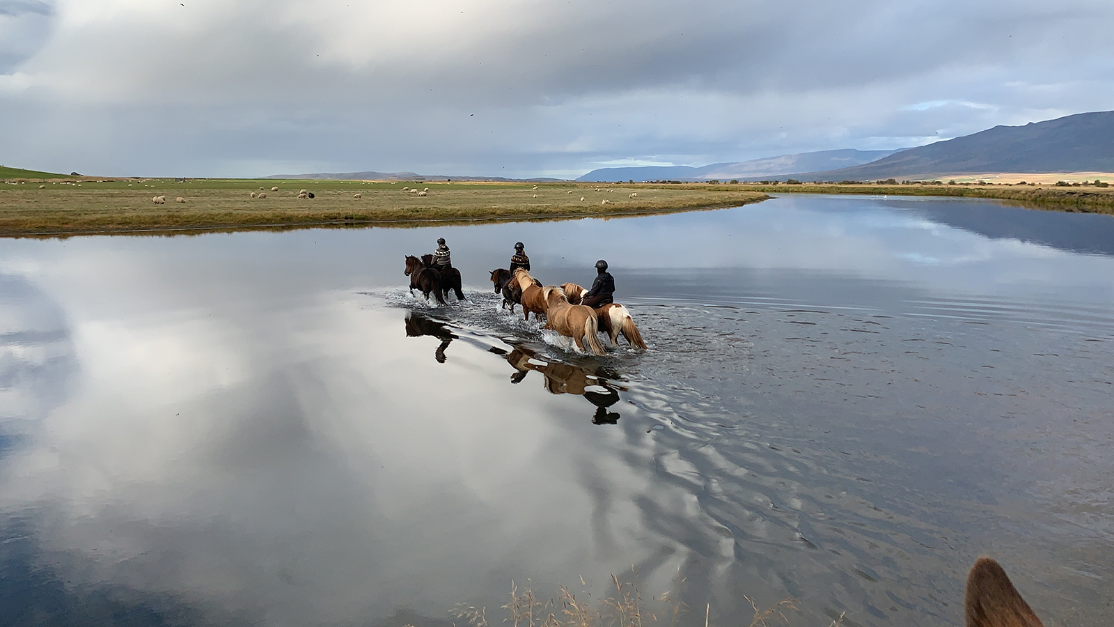 A fall gather in Iceland rounds up horses and sheep.