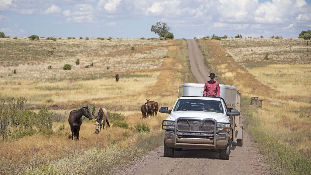 A truck and trailer drive past horses during the photography workshop