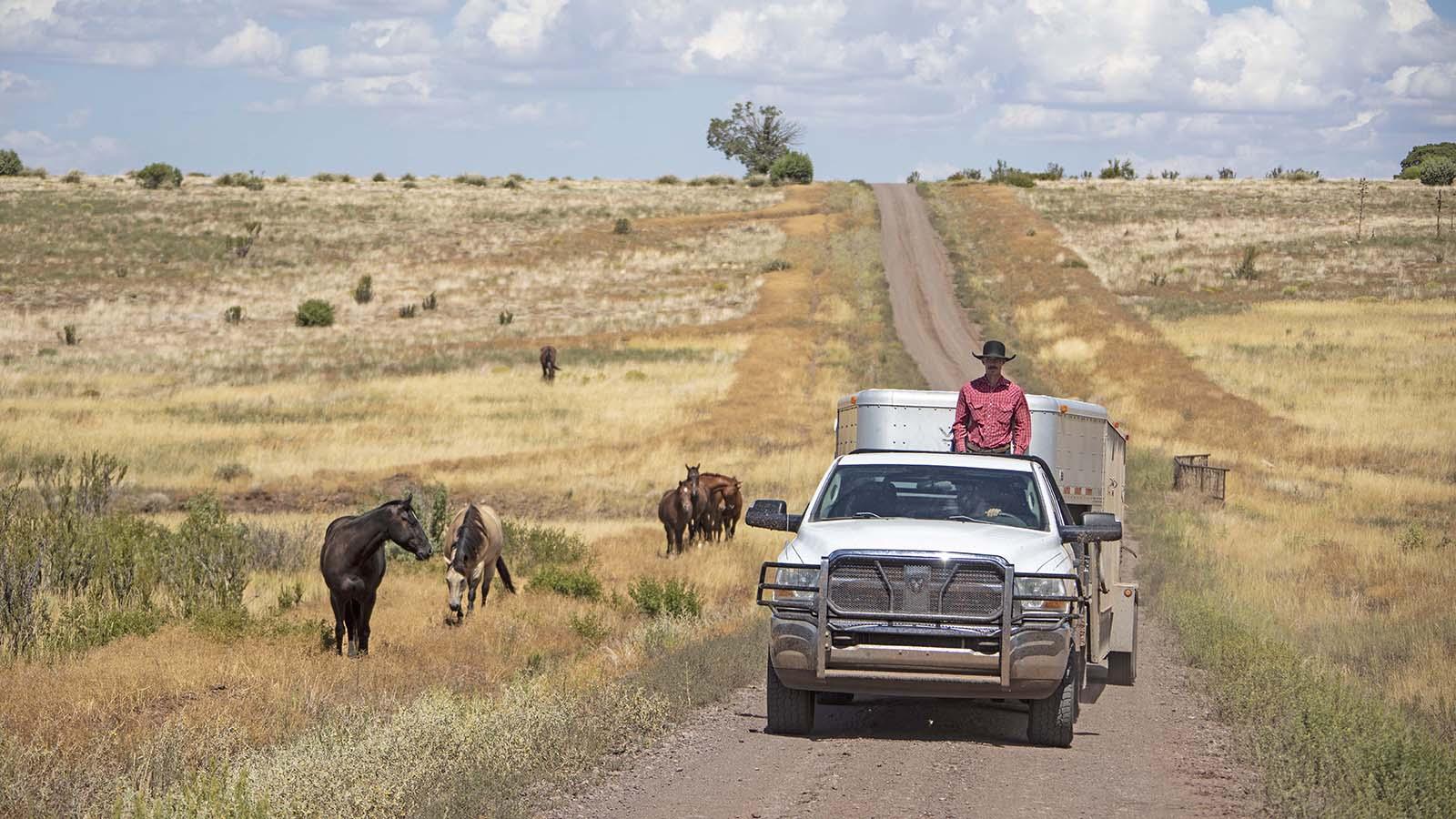 Cowboys driving on O RO Ranch