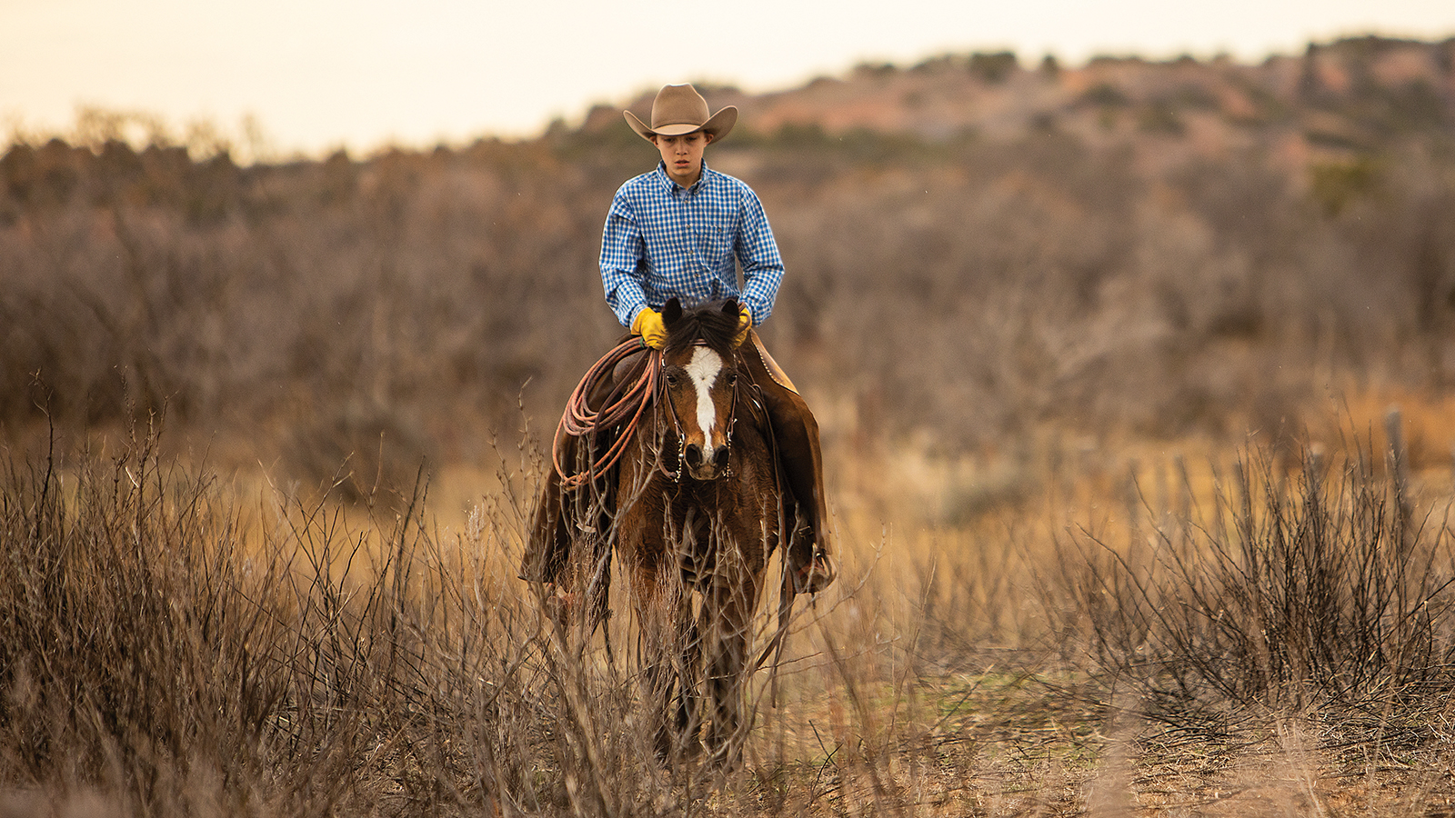Tugboat will be auctioned at the Western Heritage Classic Horse Sale in May in Abilene, Texas.