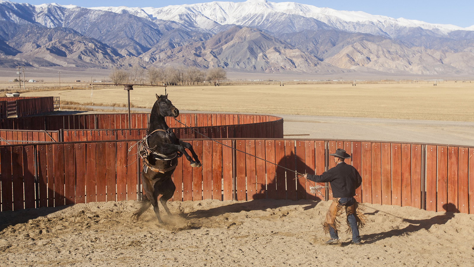 Nick Dowers ropes a horse.