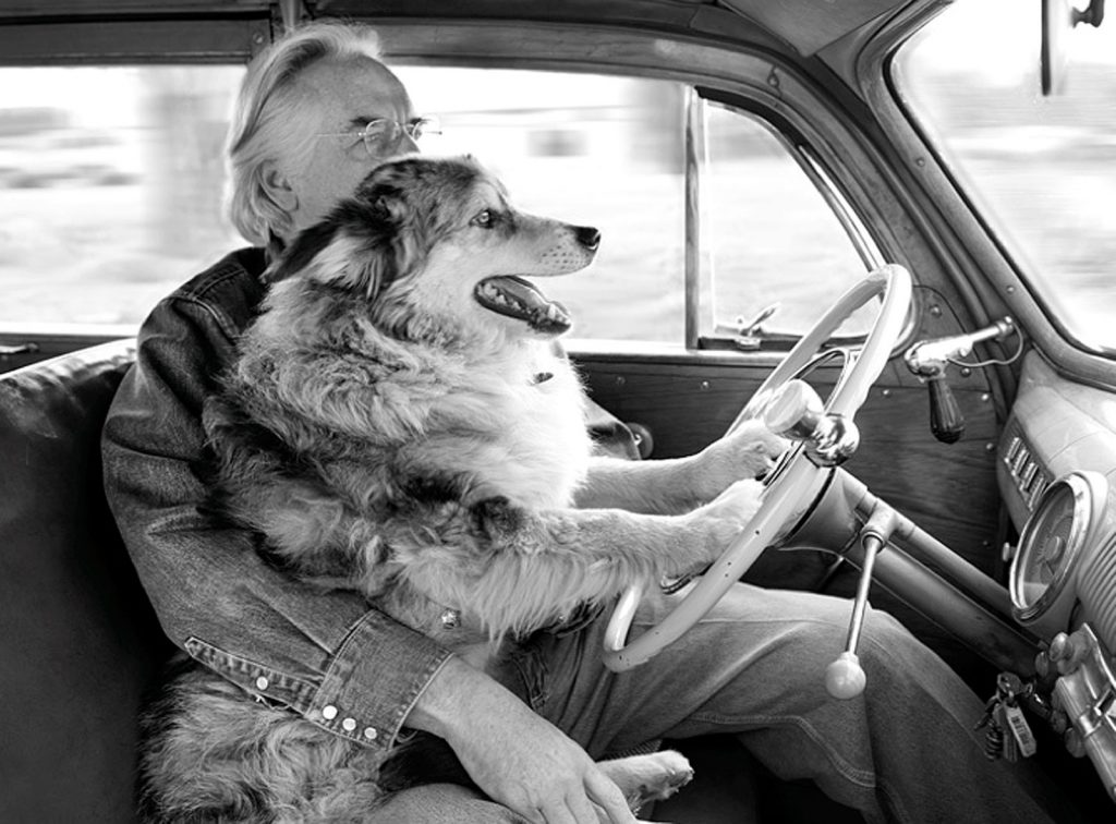 Photographer Jim Stuart drives in a car with his dog, Shorty.