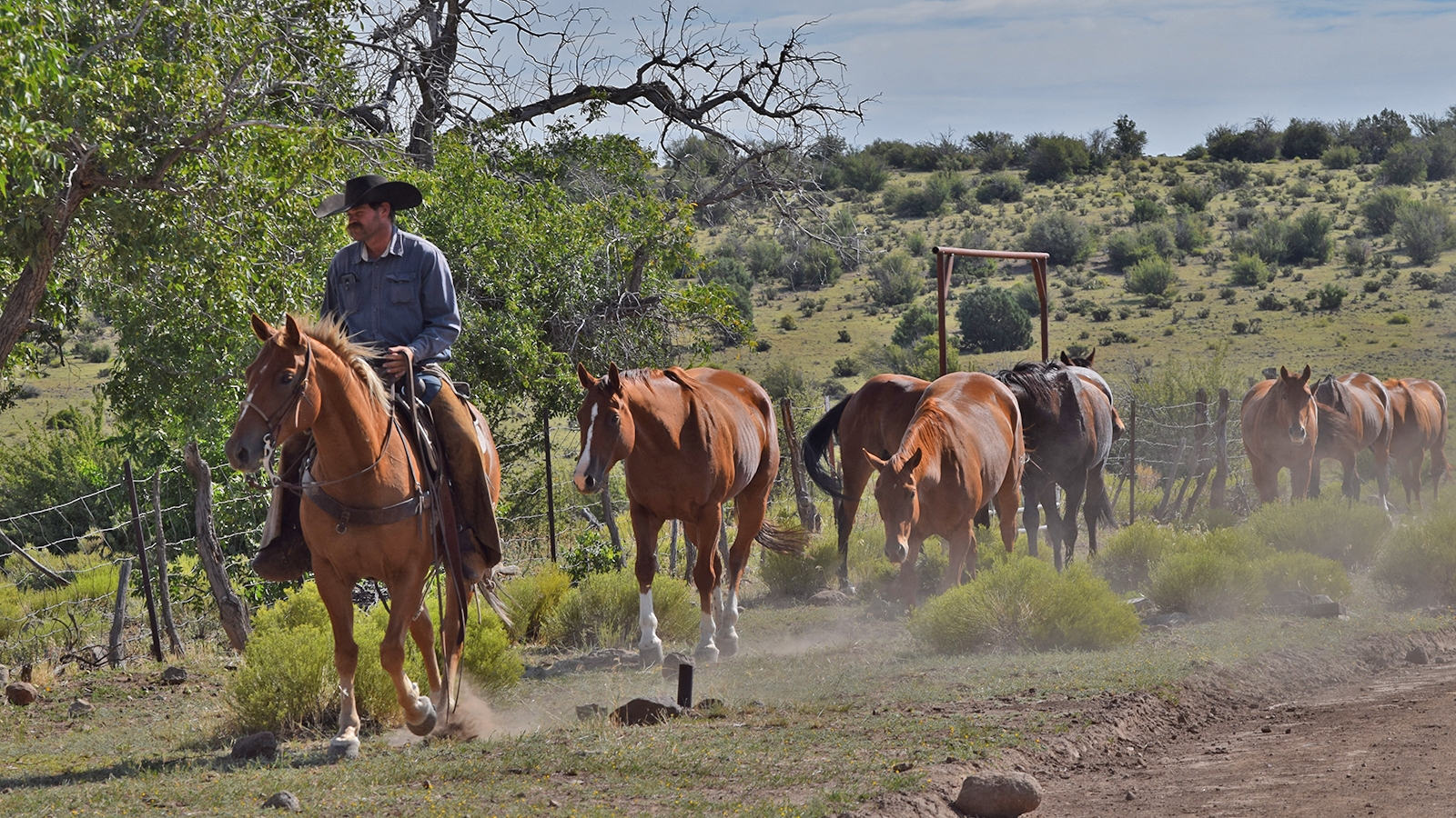 For Cowboys Social Distancing Is Nothing New Western Horseman