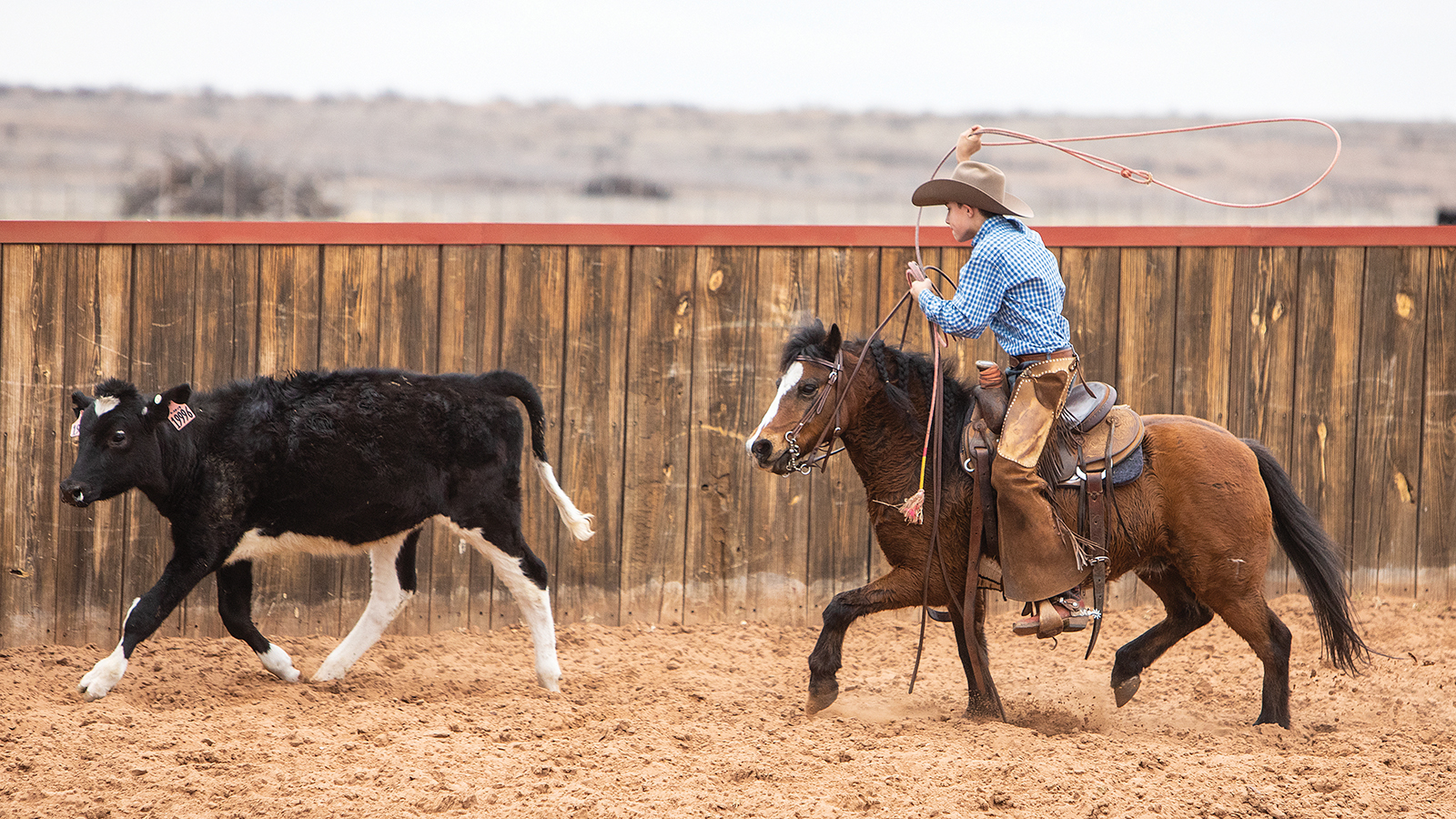 Blaine Roberts works with Tugboat the pony on Tongue River Ranch.