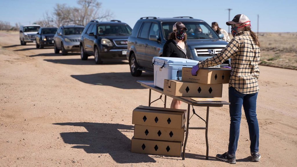 Cars line up to receive beef donated by Chico Basin Ranch.