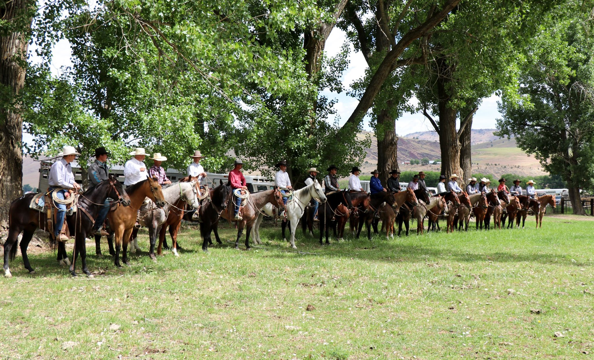 Horses for sale at Ranchers Horse Sale