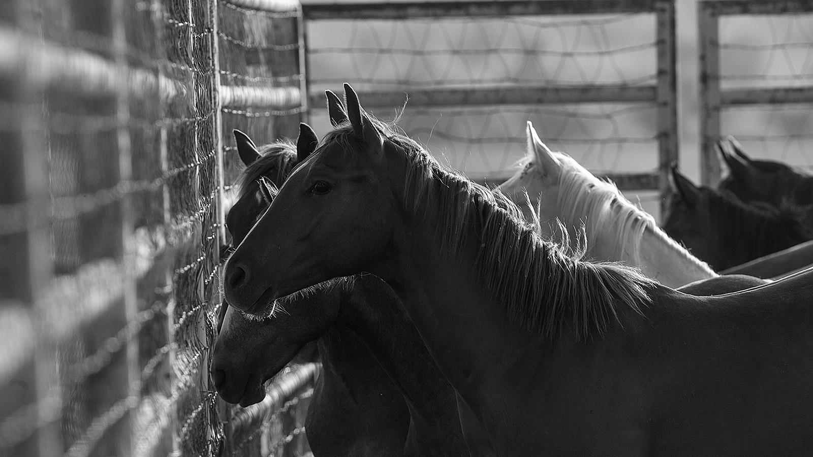 horse pasture fencing