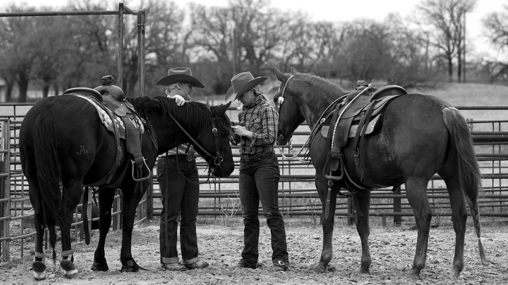 Horse owners care about their horses