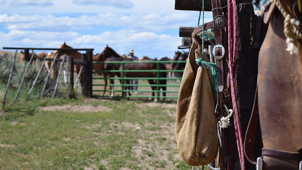 Homeschooling on a ranch