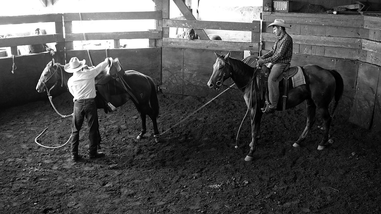 Starting a colt under saddle