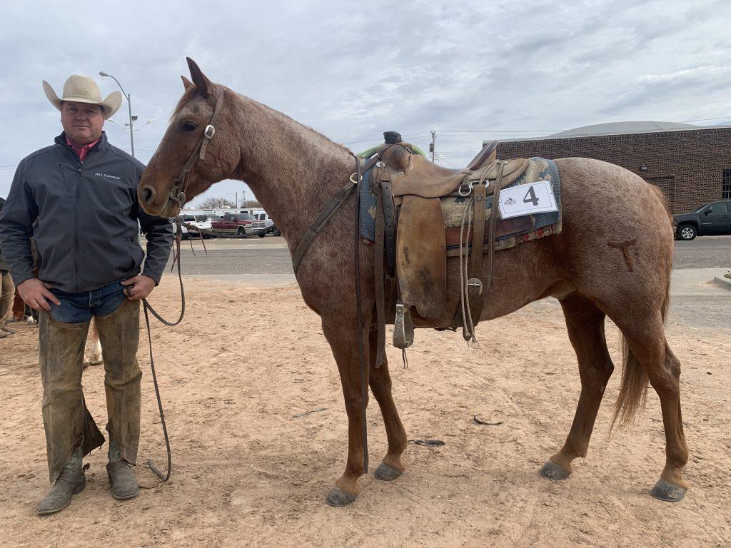 WRCA Top Horse contender TRR Mr Powder
