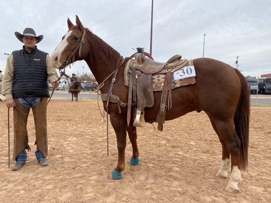 WRCA Top Horse contender Helmer
