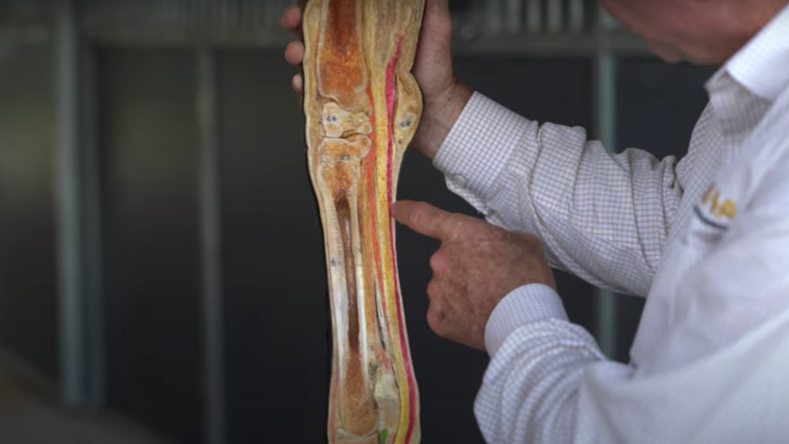 Dr. Steve Allday pointing out parts of an equine joint