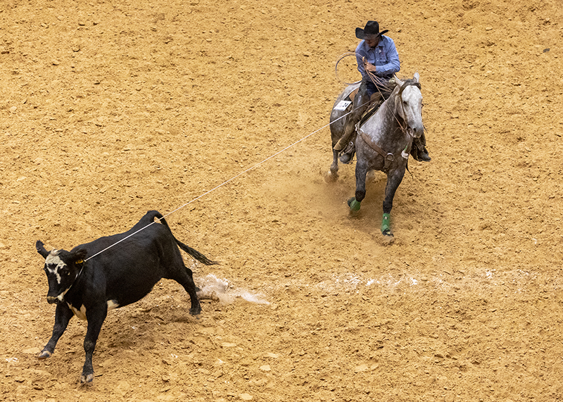 Cowboys compete at the World Champsionship Ranch Rodeo