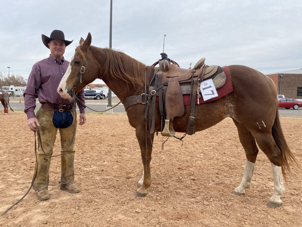 WRCA Top Horse contender Moleo Rondo Nocharge