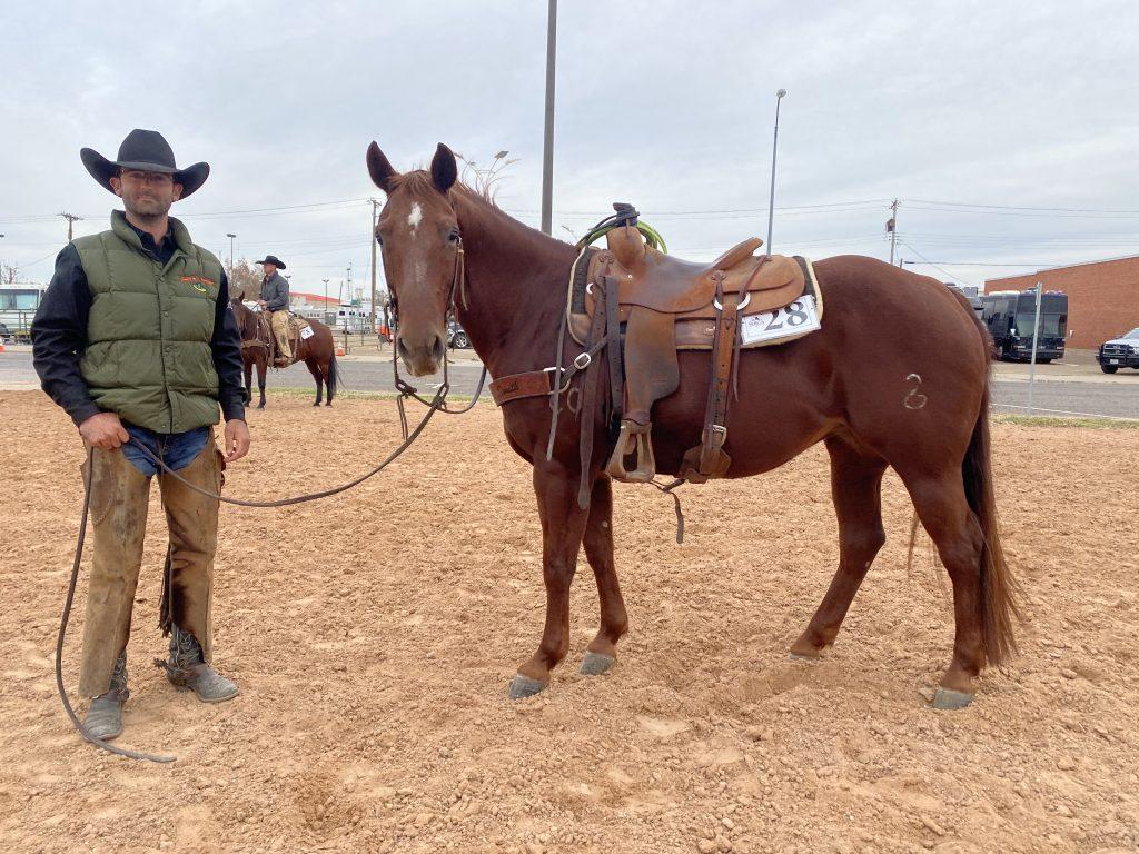 WRCA Top Horse contender Toys Jerry Maxi