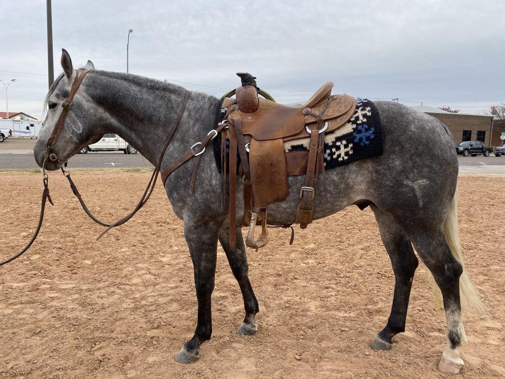 WRCA Top Horse contender TRR Lucky Brazos