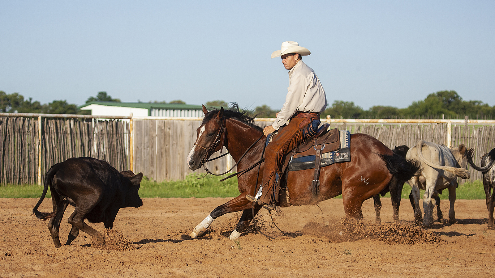 Cory Pounds trains cutting horses