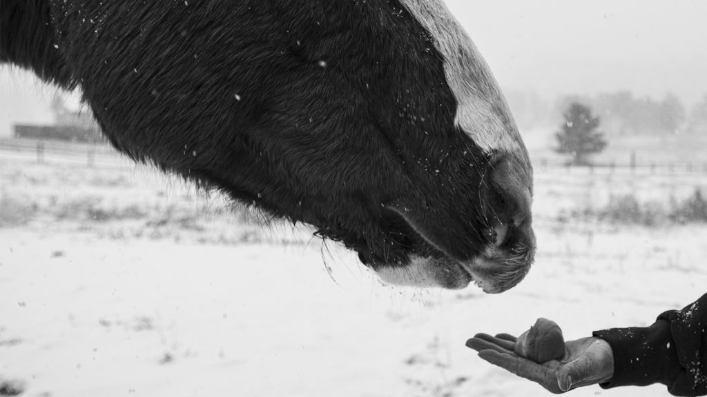 Feeding an apple to a hors