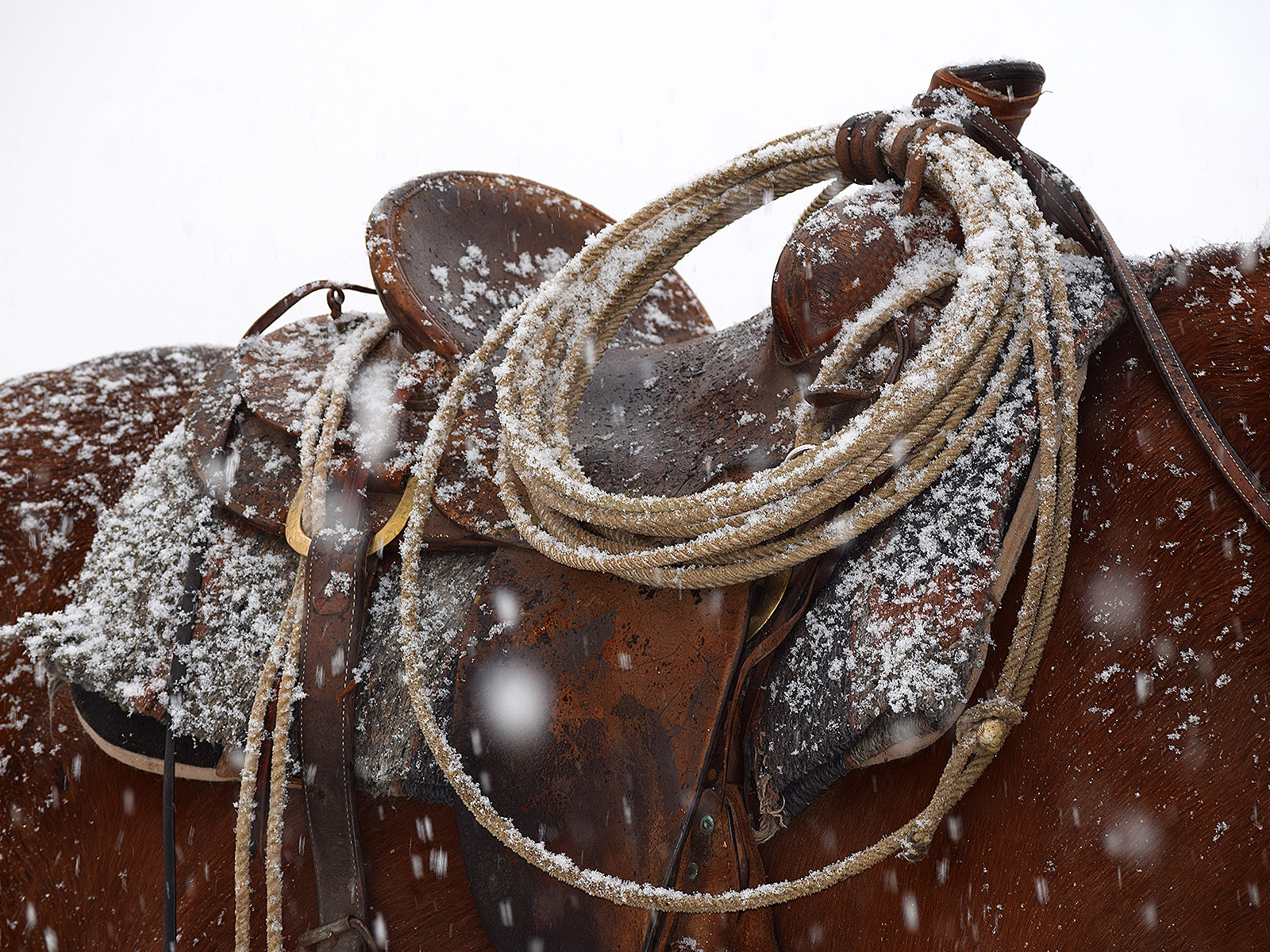 Saddle in the snow