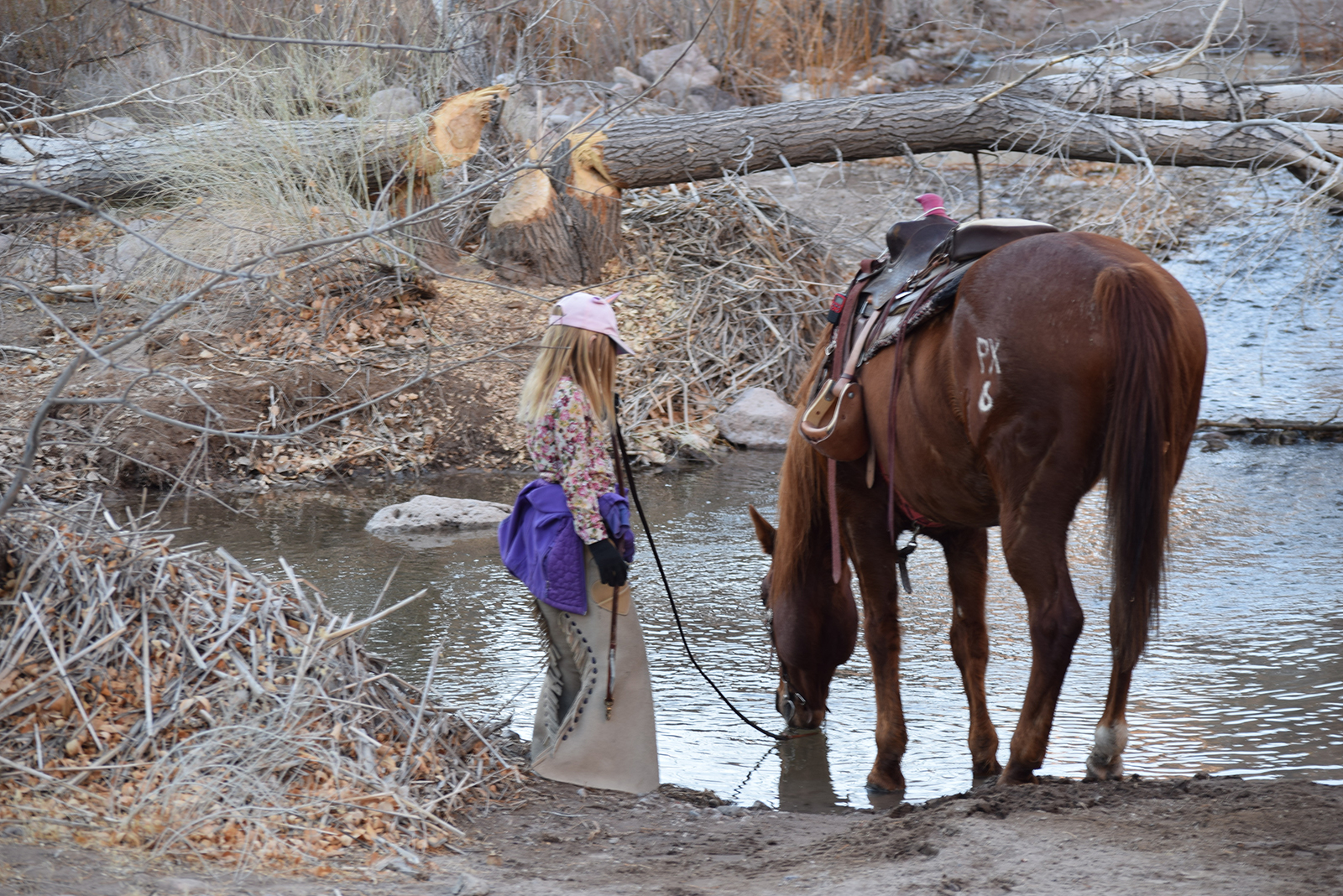 Girl watering her horse in cow camp