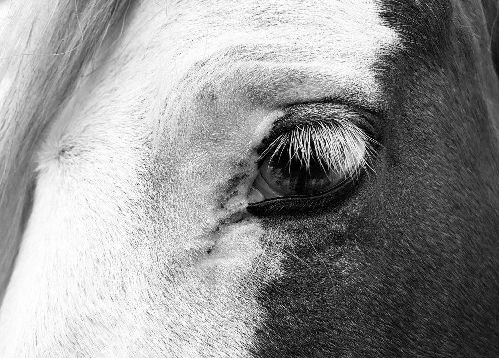 blue eyed horses