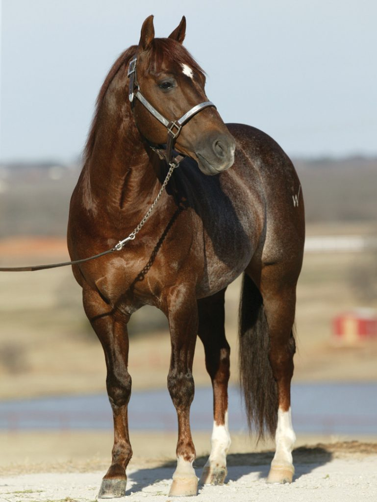 Number four of the top ranch horse bloodlines is High Brow Cat.