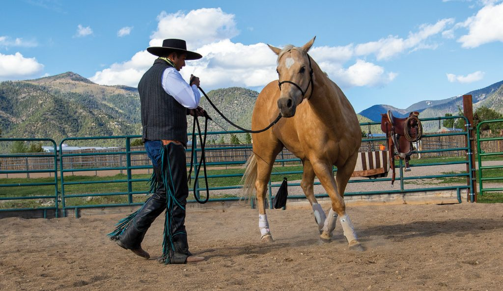 Lara moves the horse around him using a flag.