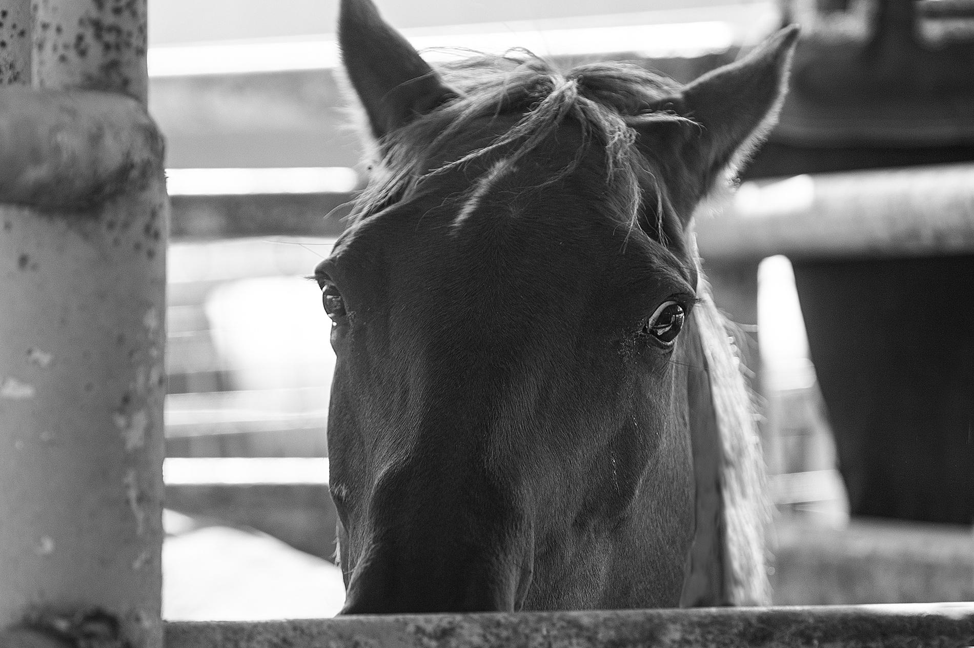 Horse phobias