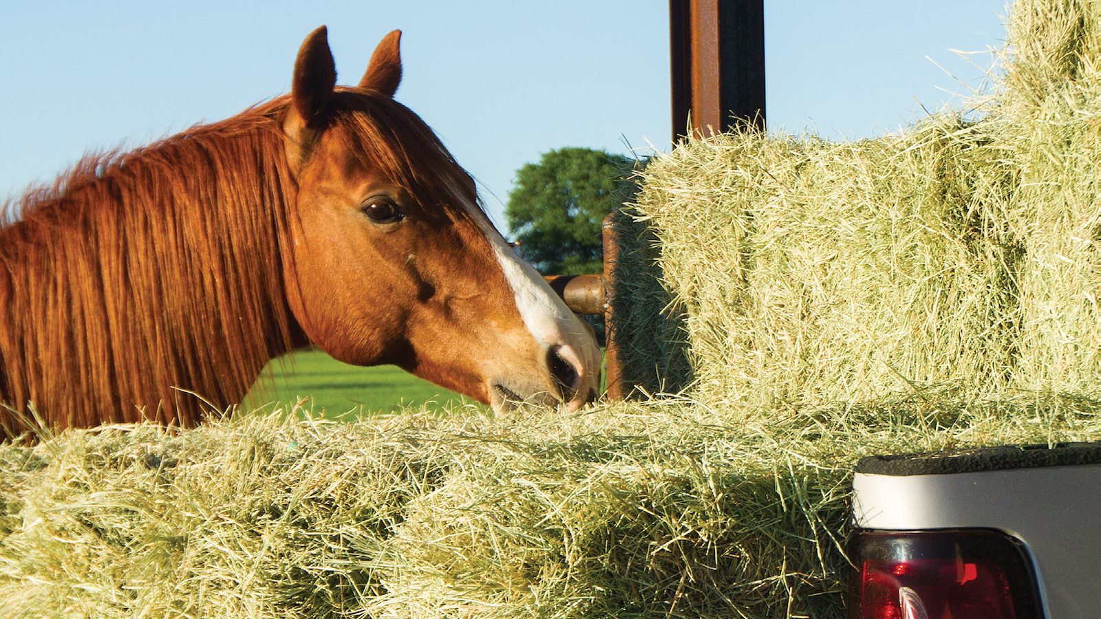 Buying horse hay is easy with these tips.