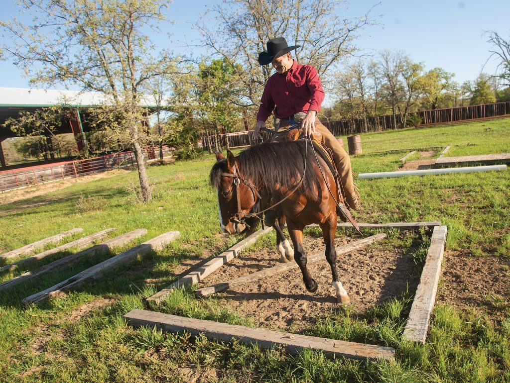Mike Major uses obstacles to teach a horse to pick up their feet.
