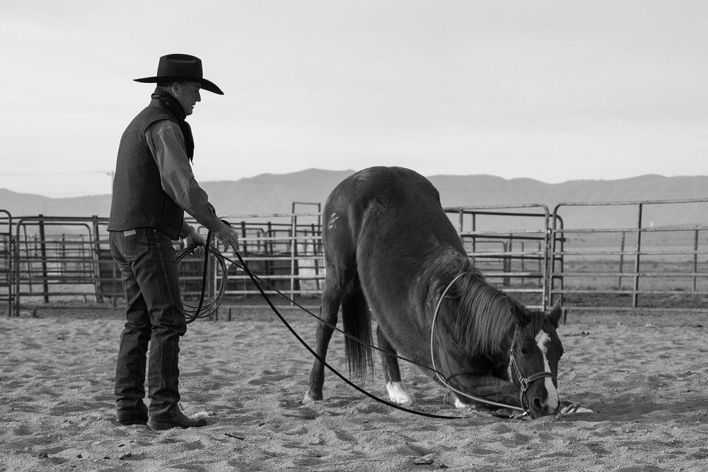 Martin Black lays down a horse.